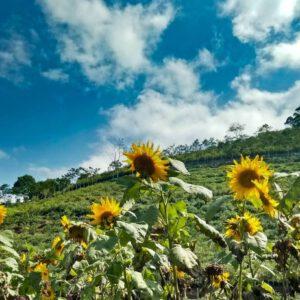 Outbound Malang Di Lembah Indah Gunung Kawi